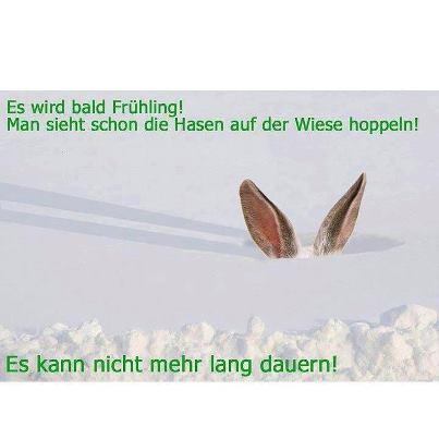 Frühlingshasen