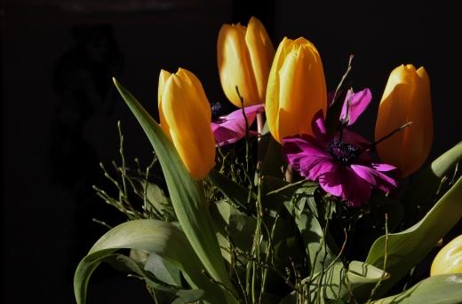 tulpen 025